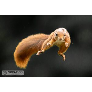 Flying Squirrel #3